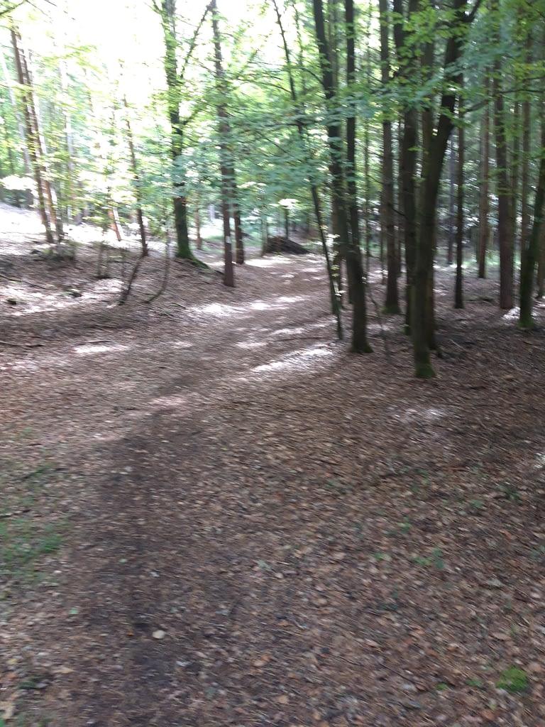 ... durch den lichten Laubwald