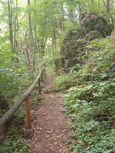 Wanderwege Eibenwald