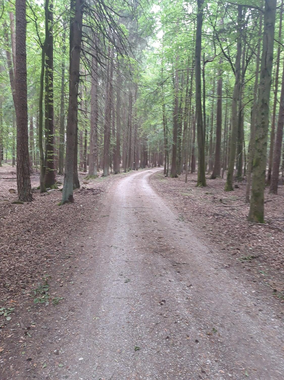 Durch den Waidacher Forst zur Fraischgrenze