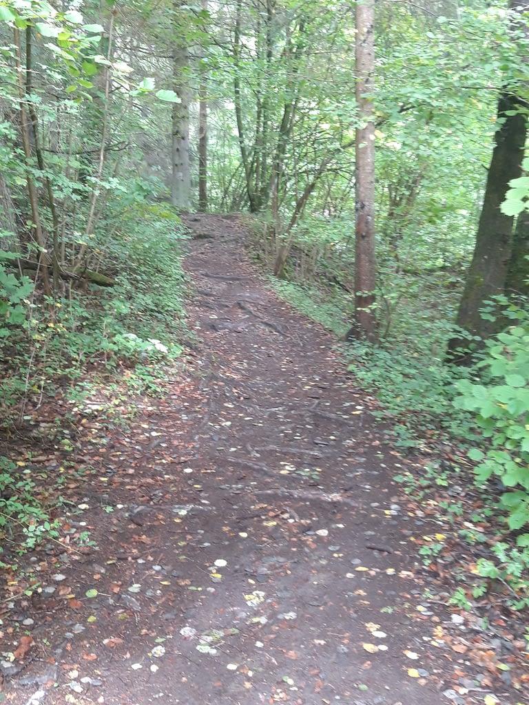 ... durch den Laubwald im Gründleinstal